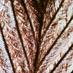 Птичьи  перья под микроскопом